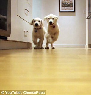 excited-dogs